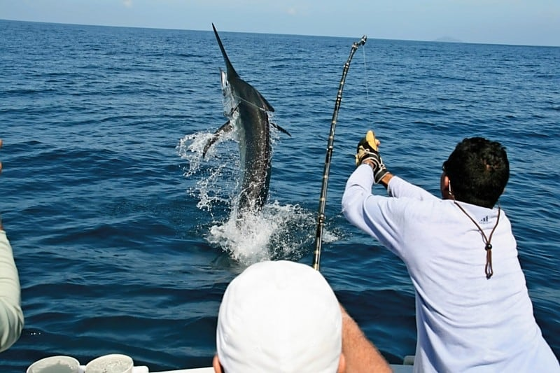 Sport Fishing in Los Cabos Cabo San Lucas